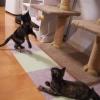 さび猫が2匹来た話